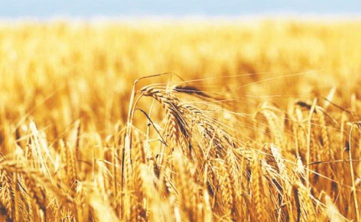 Un record historique de la production céréalière nationale