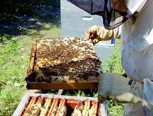 Une semaine d'apiculture organisée par la Direction provinciale de l'agriculture : Mogador exalte ses produits du terroir