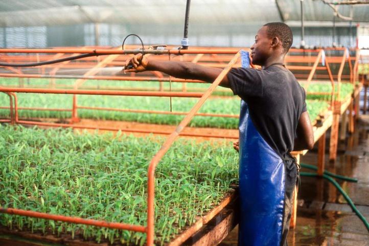 La création d'emplois décents dans l'agriculture réduirait la migration des jeunes