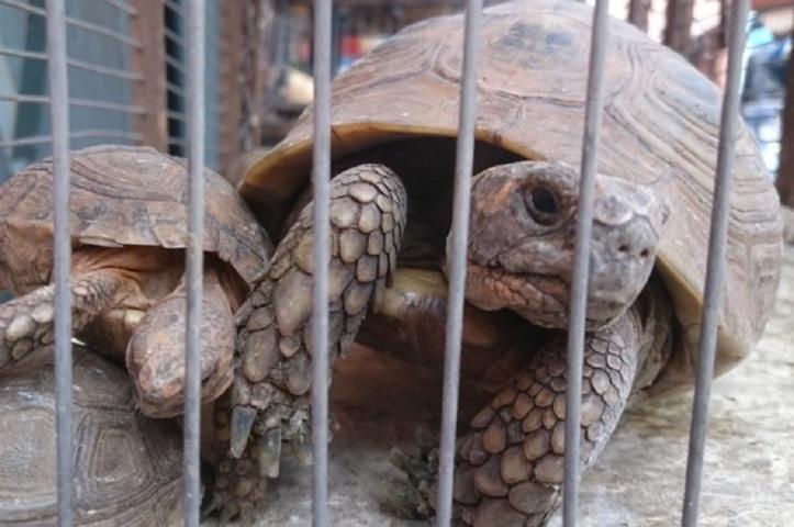 Les marchés marocains de la faune accusés de maltraitance