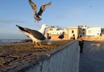 On lui a refusé l'accès au CHU de Marrakech : Une touriste française décède au CHP d'Essaouira