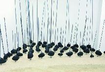 Exposition d'art contemporain à Casablanca  : Regards créateurs sur la nature