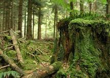 La reconstitution des peuplements forestiers