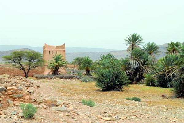 Province d'Assa-Zag : La Journée de l'arbre célébrée en grande pompe