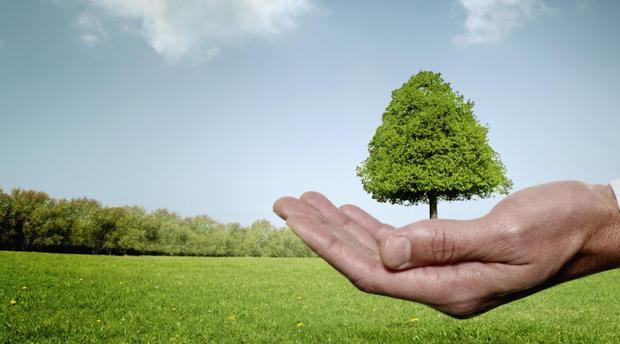Dix entreprises en lice pour le meilleur projet vert de  l'année