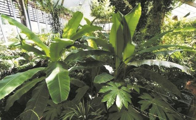 Coup de jeune pour les plantes vertes, à l'heure des réseaux sociaux