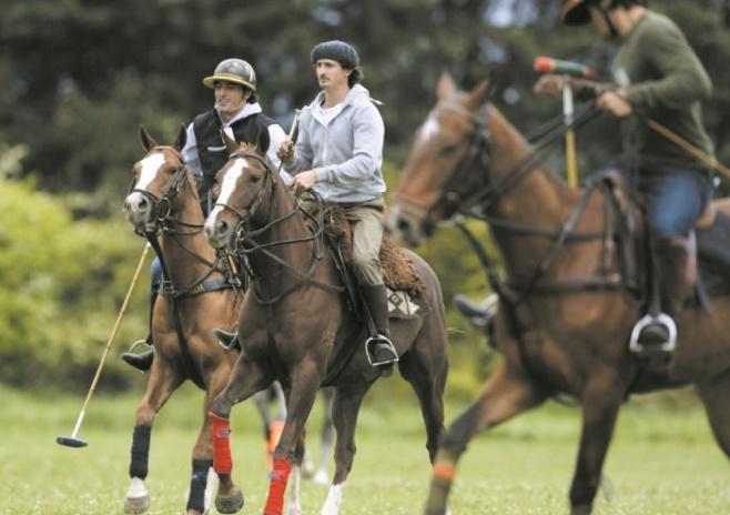 La génétique pour percer les secrets des meilleurs chevaux de polo du monde