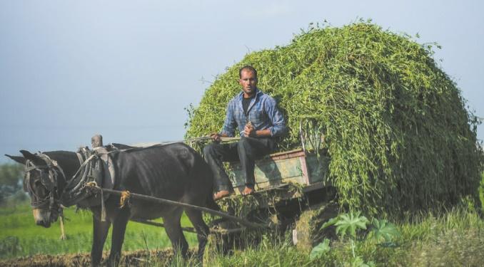 Les champs fertiles du Delta du Nil menacés
