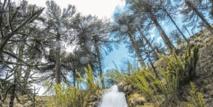 Au Chili, le risque d'une hécatombe plane sur les forêts de pins millénaires