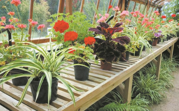 Des plantes d'intérieur pour lutter contre la pollution