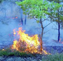 Le comité directeur de prévention et de lutte contre les incendies de forêts se prépare à la saison estivale : 8.000.000 de dirhams pour le lancement d'une campagne de sensibilisation