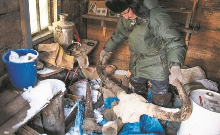 """Mammouths en Sibérie : La ruée vers """"l'ivoire des glaces"""""""