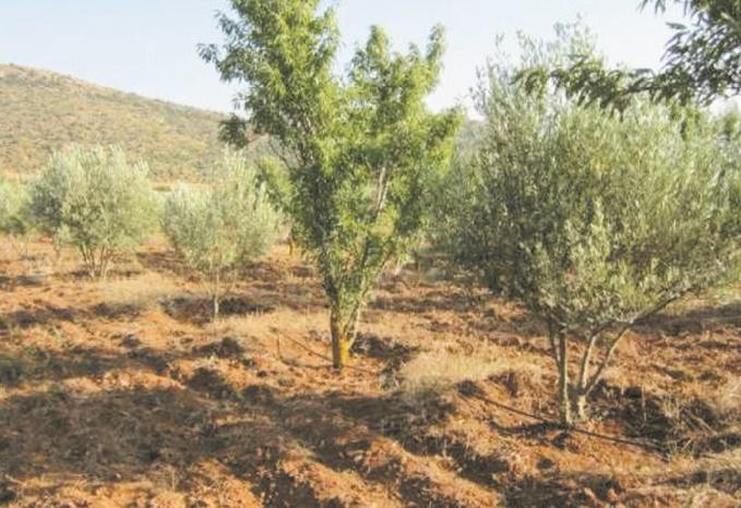 L'état d'avancement de plusieurs projets agricoles dans la région de l'Oriental