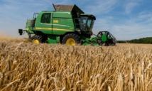 Benslimane enregistre un total de 93 mille ha emblavés en céréales d'automne