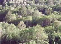 Conférence ministérielle sur la protection des forêts en Europe : Le Maroc participe aux travaux en qualité d'observateur