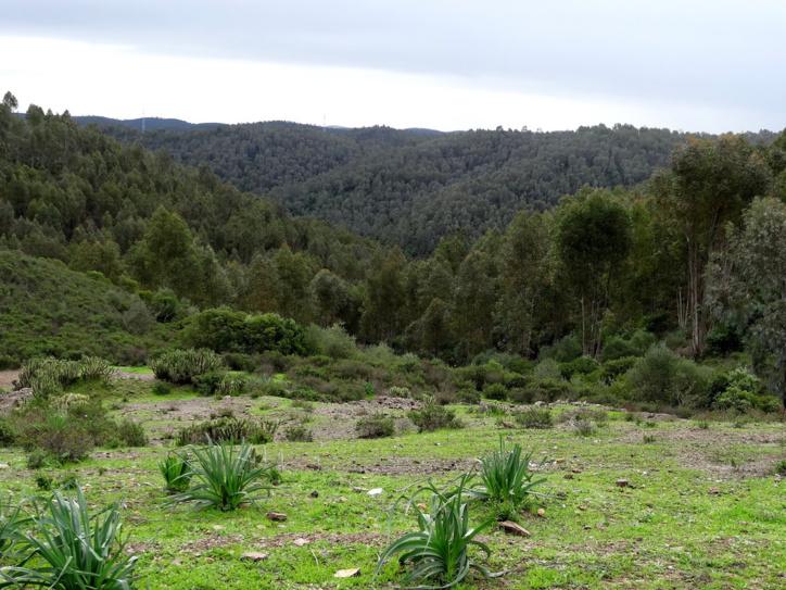 L'espace forestier, troisième poumon de la province de Sidi Slimane