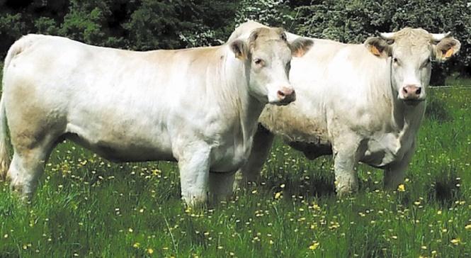 De la prairie et moins d'élevage intensif pour nourrir l'Europe en 2050