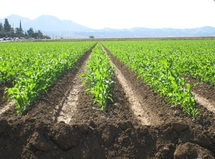 Lancement de la campagne agricole : Les promesses ont plu à Fès