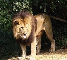 Faune marocaine : Huit espèces de mammifères disparues