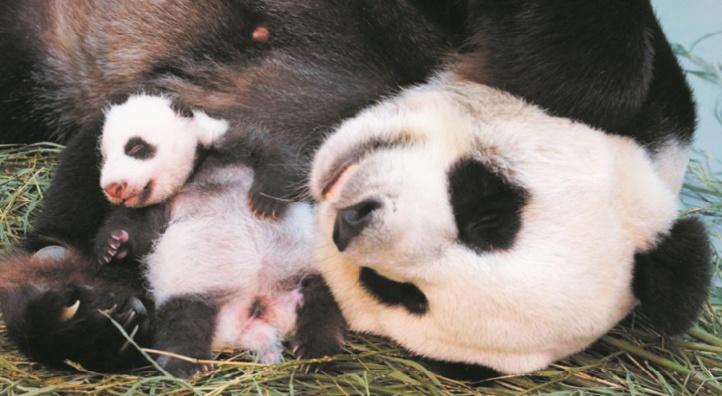 """""""Dégueus"""" ou """"trop mignons!"""", les animaux discriminés par leur image"""