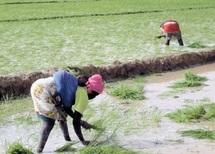"""Les paysans africains, victimes de la chasse aux milliards """"verts"""""""