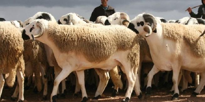 Le Programme national de lutte contre la fièvre aphteuse s'étend aux ovins et caprins