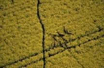 Les paysans brésiliens parient sur les biocarburants