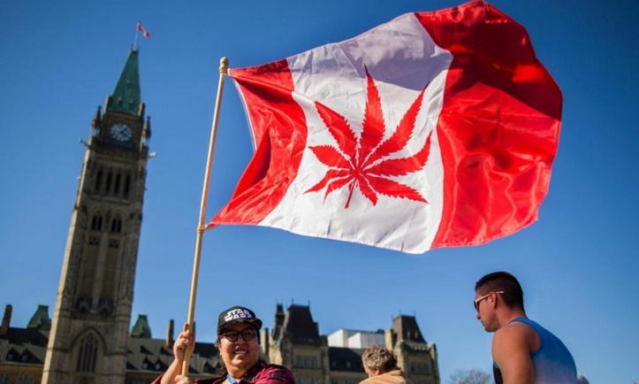 Au Canada, davantage de nouveaux consommateurs de cannabis depuis la légalisation