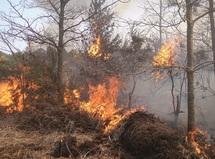 Seule une coopération intensive diminuera les risques d'incendies : 3000 hectares de forêts partent annuellement en fumée au Maroc