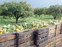 Berkane : Les préparatifs de la campagne agricole vont bon train