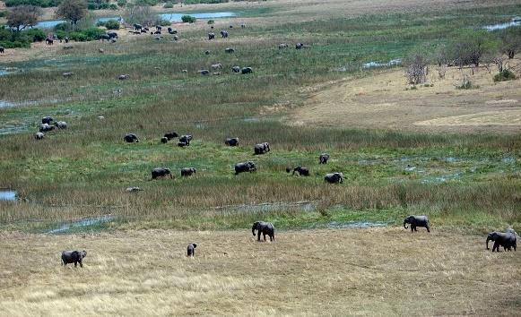 Réactions passionnées après le rétablissement de la chasse aux éléphants au Botswana