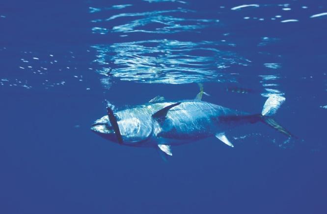 """Sauver les poissons, """"moins compliqué"""" que le climat !"""