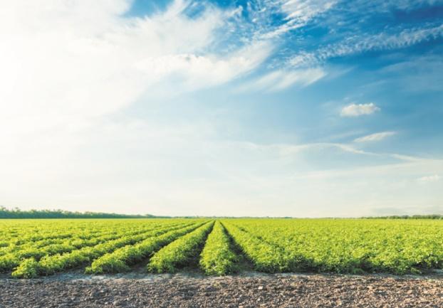 L'agriculture peut aussi rafraîchir la planète