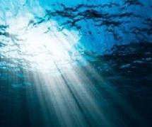 Des bruits maritimes devenus invivables pour les mammifères