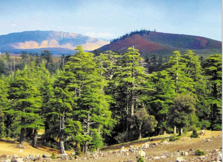 L'ingénieur forestier en rempart contre la déperdition des forêts