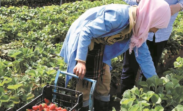 La région de Casablanca-Settat ambitionne de créer 1.250 coopératives agricoles à l'horizon 2023