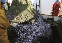 Les pêcheurs européens sommés de lever l'ancre Le Maroc naviguera sans l'Union européenne