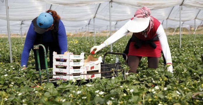 L'insoutenable quotidien des  saisonnières marocaines en Espagne