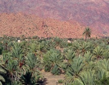En proie à des agressions à tout va : La palmeraie de Tafraout en danger de disparition