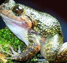 18.000 nouvelles espèces découvertes en 2011