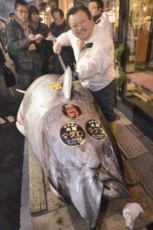 Un prix record pour un thon rouge
