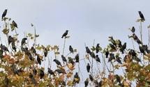 Oiseaux, papillons et flore alpine rattrapés par le réchauffement en Europe