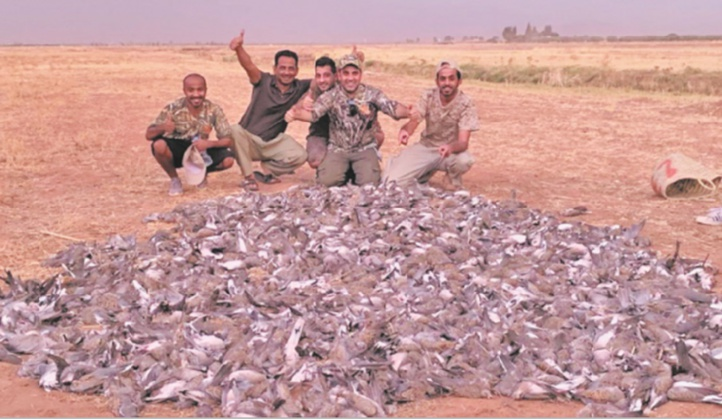 Une partie de chasse d'oiseaux indigne la Toile