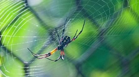 Le réchauffement climatique rend les araignées plus agressives