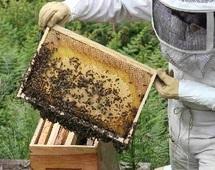 Région de Doukkala-Abda : L'apiculture promise à un bel avenir