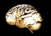 Le centre de la parole dans le cerveau n'est pas là où on le pensait