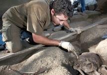 L'œuvre d'art la plus vieille du monde aurait 42.000 ans