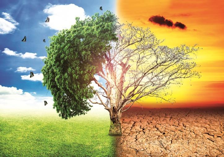 Le changement assassin : La dégradation de la qualité de l'eau, de l'air et du sol en cause