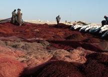 Laâyoune accueille une délégation d'opérateurs économiques mauritaniens : Renforcement de la coopération en matière de pêche