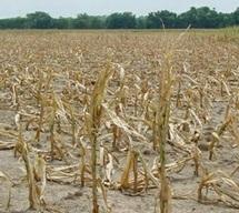 Le SIAM entame ses préparatifs dans un contexte morose :  La saison agricole joue son va-tout cette semaine